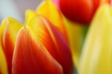 Tulips van Susanne Herppich