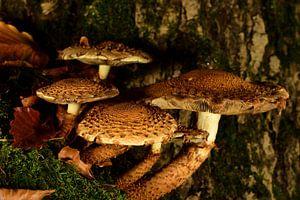 Een groepje paddenstoelen van