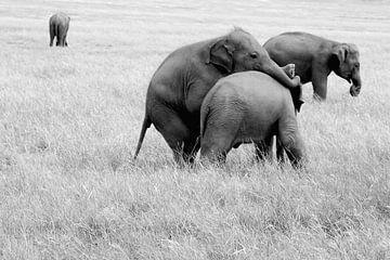 Spielende Elefanten, Sri Lanka von Inge Hogenbijl