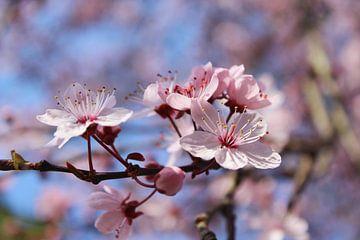 Blütentraum von Dagmar Marina