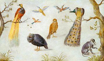 Studie von Vögeln und Affen, Kreis von Jan van Kessel