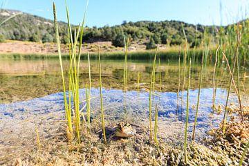 Frosch in einem Teich von Gerben Tiemens