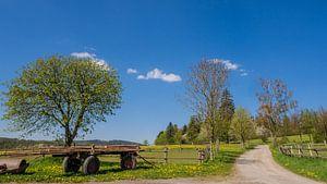 Lentekleuren in het Sauerland van