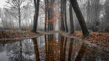 Entre l'automne et l'hiver sur Peter Korevaar