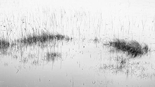 Riet in het water van Johan Zwarthoed