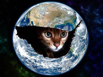Kat in de wereld von Nannie van der Wal