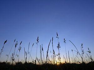 Silhouetten van grassen op het blauwe uur van Katrin May