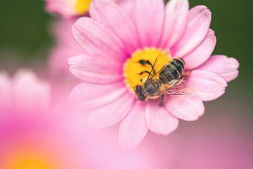 Biene von Alena Holtz