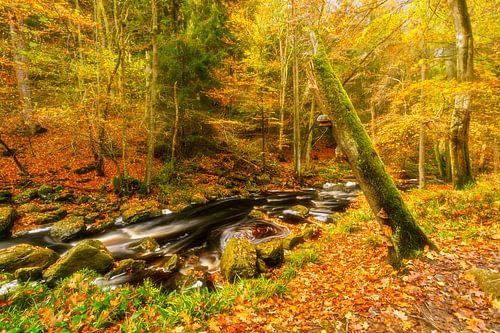 Herfstbeek met boomstronk van