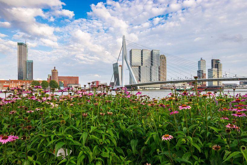 Summer in the city sur Ton Kool