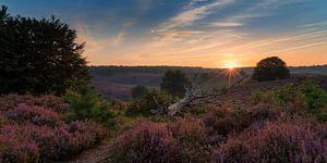 Een nieuwe dag over de paarse heide