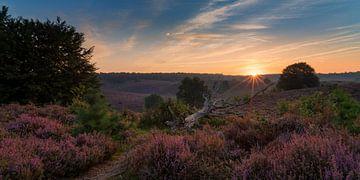 Een nieuwe dag over de paarse heide van Toon van den Einde