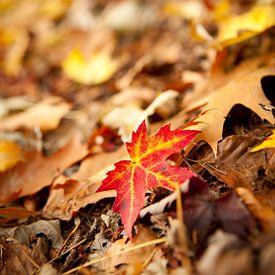 Gekleurd esdoornblad op een bospad in de herfst van Marcel Bakker