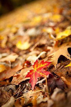 Gekleurd esdoornblad op een bospad in de herfst