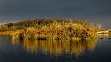 Landschap Noordhollands Duinreservaat. van Robert Moeliker