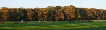 Bunte Eichen, Wiesen, Herbst von Wim vd Neut