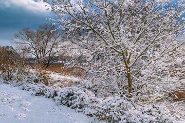 Bomen aan de oever van de Warnow in de Hanzestad Rostock in de winter van Rico Ködder