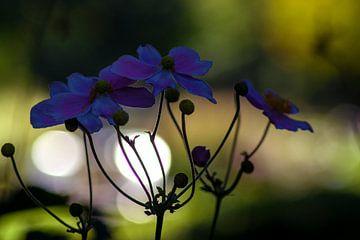 Concept flora : Herfstanemoon van Michael Nägele