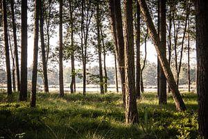 Door de bomen naar het ven kijken