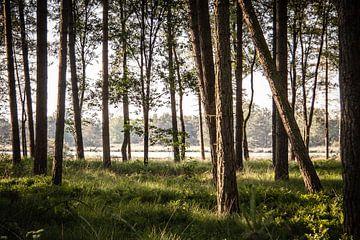 Door de bomen naar het ven kijken van H Verdurmen