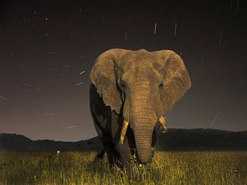 Tanzaniaanse Olifant von Robbie Veldwijk