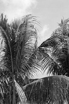 Zwart Wit Palm Bladeren van Henrike Schenk
