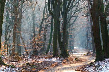 Een zonnige winterdag met mist in het Speulderbos von Richard de Boorder