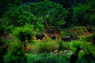 Elefanten-Safari von Johan Schouls