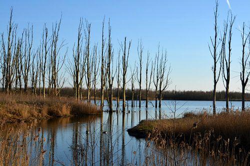 Bomen met spiegeling in het water van de Biesbosch