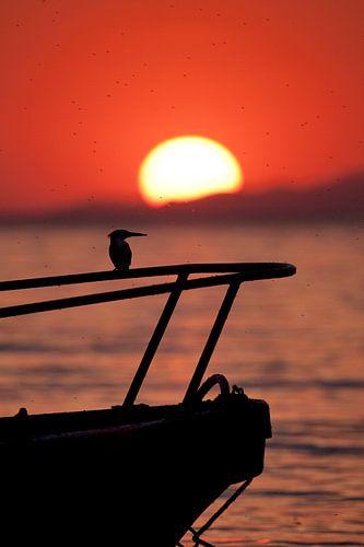Ijsvogel sunset van
