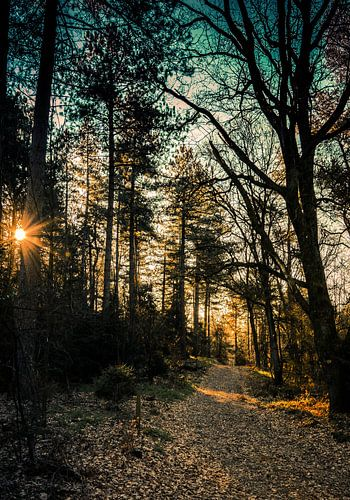 Early sunshine in the woods