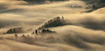 Nebel in Pieniny von Wojciech Kruczynski