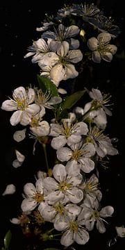 Kersenbloesem - Na de regen van Christine Nöhmeier