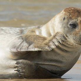 Grey seal with a tear in it's eye sur Art Wittingen