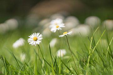 small flowers - ganz groß von Berthold Ambros