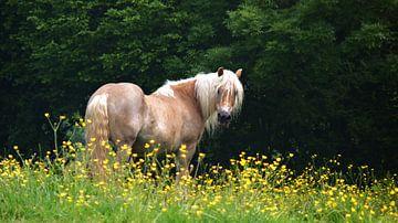 Blonde Schönheit von Daphne Photography