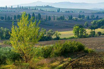 Hügel um Pienza von Filip Staes