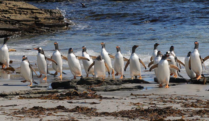Pinguins aan de wandel  van Peter Zwitser