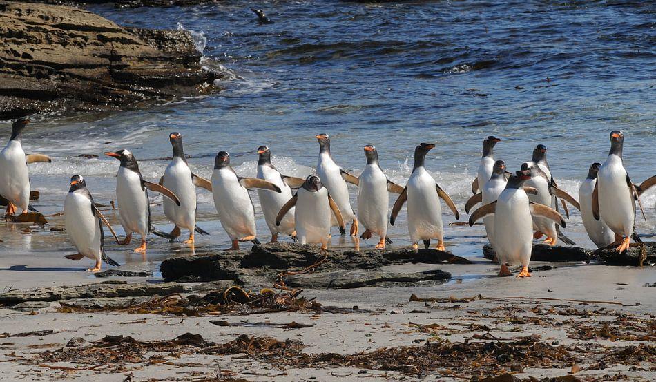 Pinguins aan de wandel