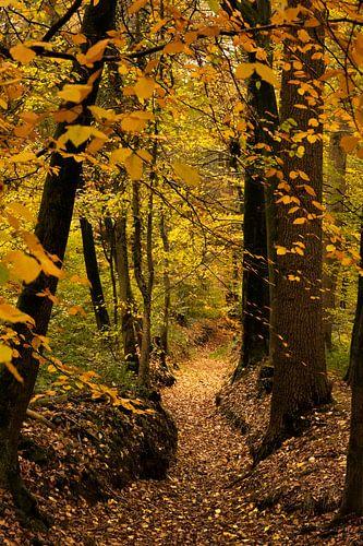 Réserve naturelle (forêt) de Bekendelle près de Winterwijk