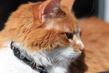 Kat in zon von Koos Esser