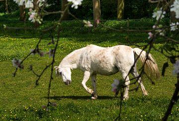 Paard in wei von Ellen Denkers-Hartman