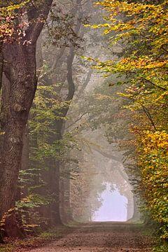 Herbstliche Farben im Wald von Frans Lemmens