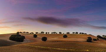 Feld der Farbe von Steven Driesen