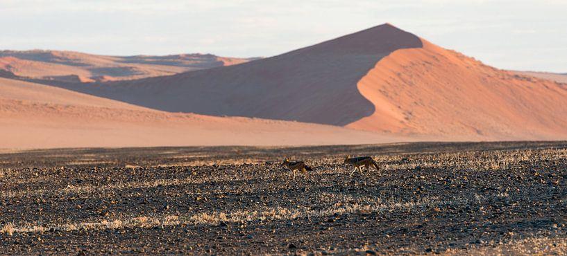 Namibië,  Sesriem,  Sossusvlei, jakhalzen in de ochtendzon van Jeannette Kliebisch