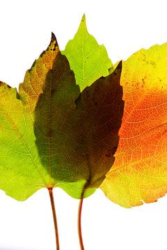 Herfstbladeren 4 van Henk Leijen