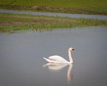 De eenzame zwaan von Roel Van Cauwenberghe