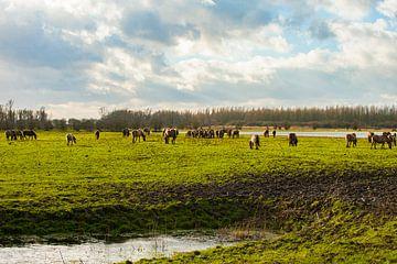 Konikpaarden in het Landschap von Brian Morgan