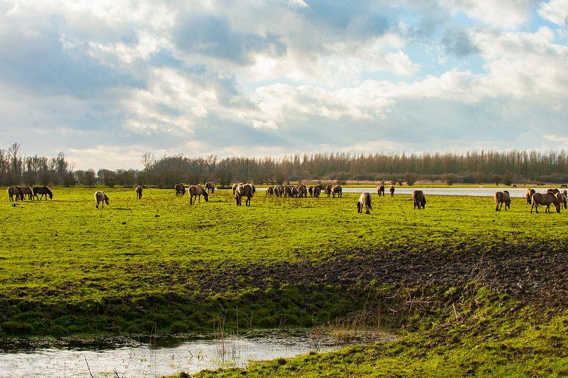 Konikpaarden in het Landschap van Brian Morgan