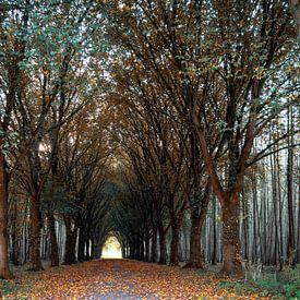 Herfst bos van Miranda van Hulst